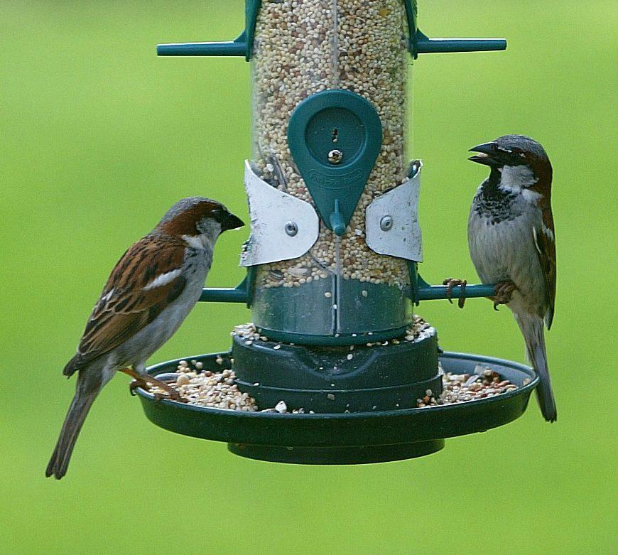 Feeding birds on seed